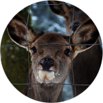 Kelowna Chainlink Fences & Gates | Farm & Deer Fencing