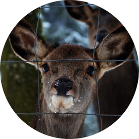 Farm Fence | Deer Fence | Quality Chain Link Fencing Kelowna