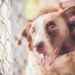 Dog Lovers, Give Your Dog the Outdoor Run He Deserves with Chain Link Fencing
