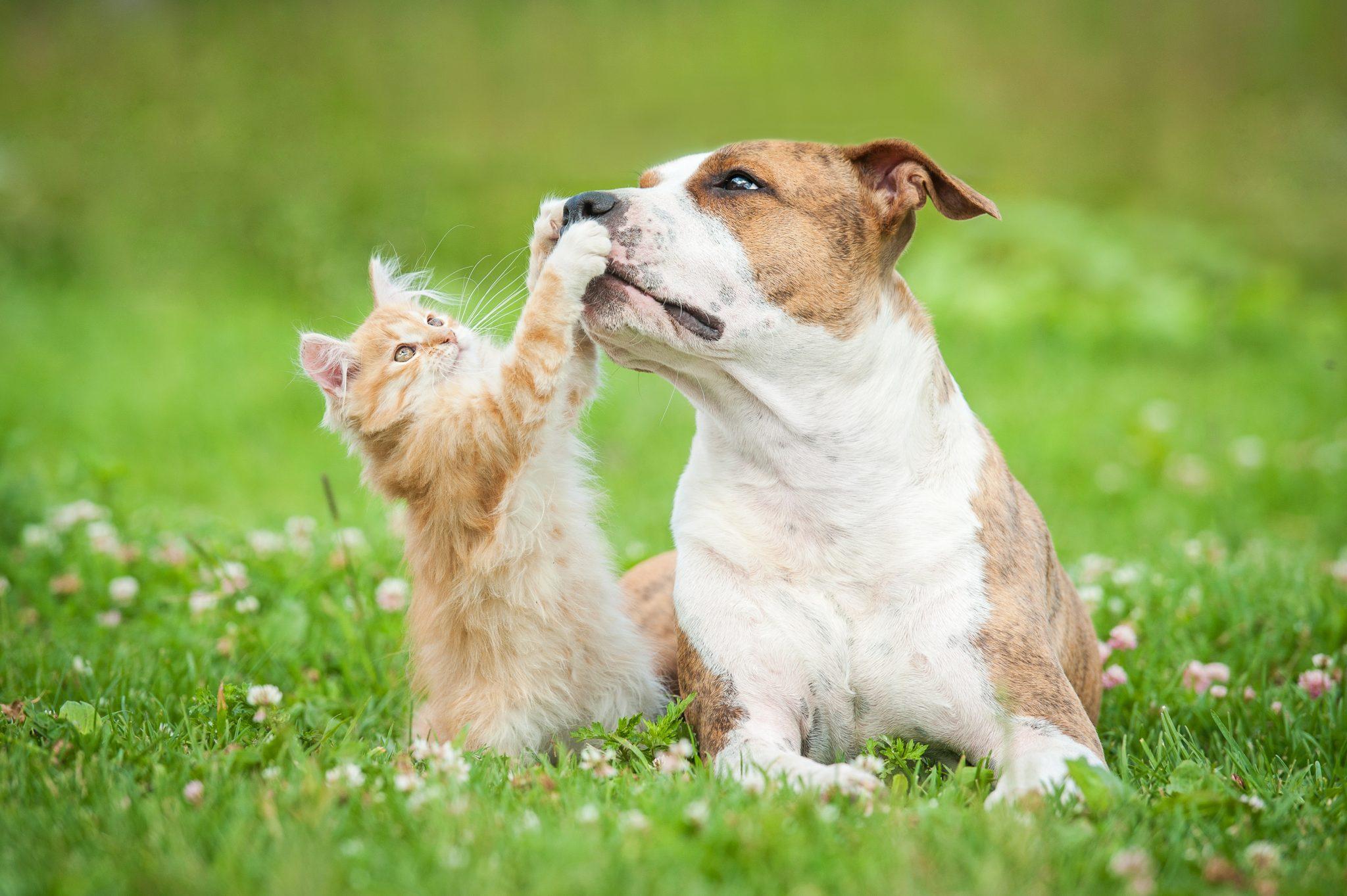 Vernon & Kelowna Yard Fencing - Dog Enclosure | Quality Chain Link Fencing