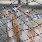 Protected: Okanagan Wildlife, Bears and Deer: Fencing Solutions to Protect Your Yard