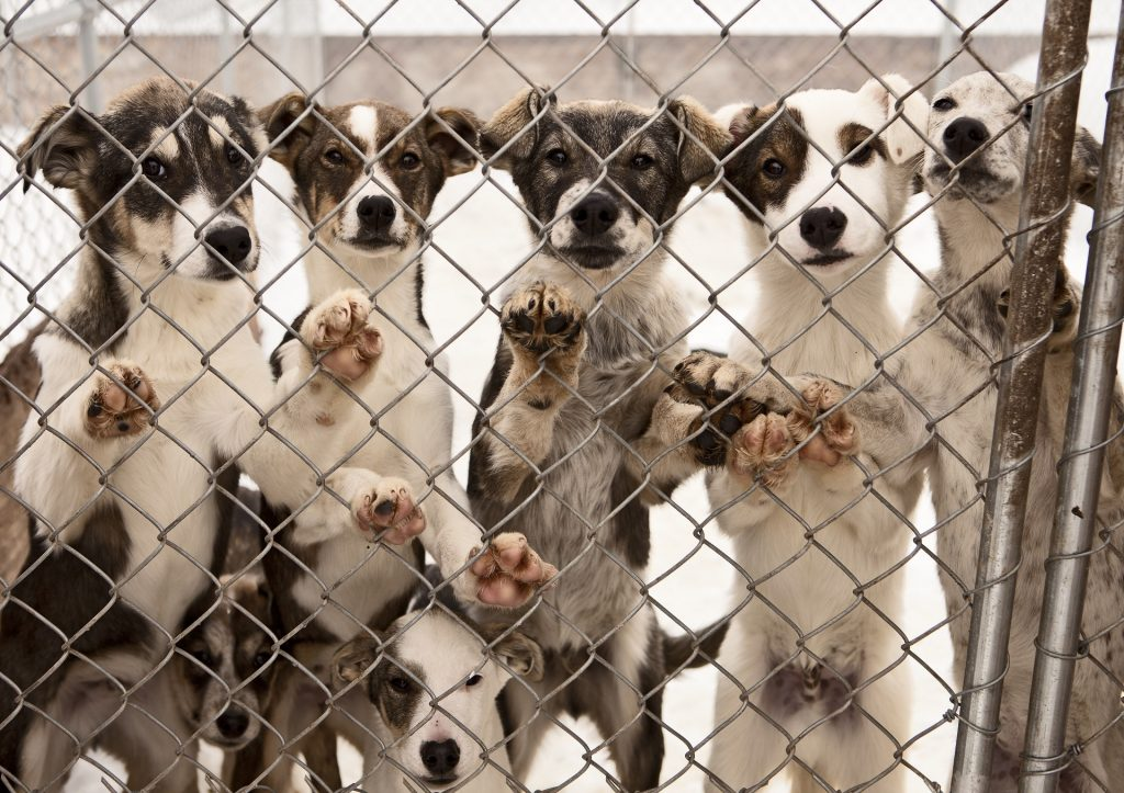 Kennel Solutions: Heavy Duty Chain Link Fence Security For Your Dog